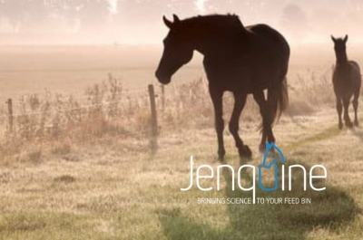 SMOKEY AIR & Protecting Equine Respiratory Health – especially during exercise
